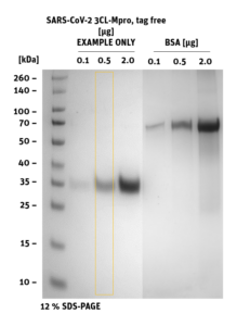 SDS-PAGE of 3CL-Mpro Tag-free