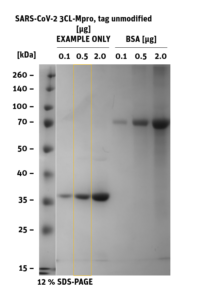 SDS-PAGE of 3CL-Mpro, unmodified