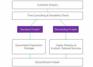 diagram of the free feasibiliy check included in the guaranteed service package for recombinant protein expression in E.coli