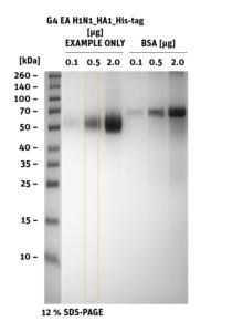 SDS-PAGE of G4_EA_H1N1_HA1_His-tag