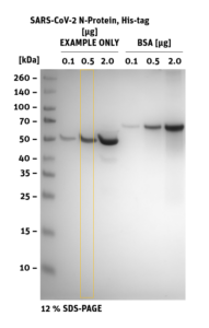 SDS-PAGE of SARS-CoV-2 N-Protein