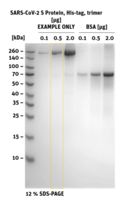 SDS-PAGE of SARS-CoV-2 S Protein trimer