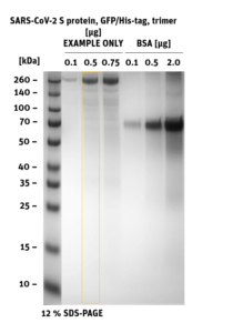 SDS-PAGE of SARS-CoV-2 Spike S-Protein trimer, GFP,His-Tag