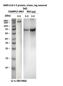 SDS-PAGE of SARS-CoV-2 Spike S-Protein trimer Tag-removed