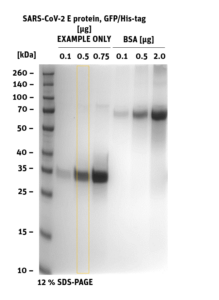 SDS-PAGE of E-Protein, GFP, His-Tag